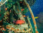 stock photo of grouper  - Coral Grouper and glassfish around an underwater wreck - JPG