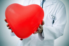 stock photo of cardiovascular  - a doctor holding a red heart - JPG