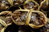 China hairy crabs