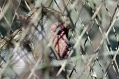 poor monkey behind wire fence