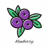 Vector illustration. Doodle blueberry. Hand-drawn object isolated on white background. Easy paste to