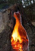 Flaming Cavity