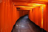 picture of inari  - Inside the tunnel of Japanese Torii Gates at Fushimi Inari Taisha Kyoto Japan.