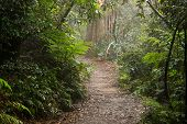 Path through the forest.