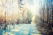 Winter Landscape. Snowy Road in Forest.