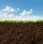 stock photo of section  - cross section of grass and soil against blue sky
