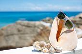 sun glasses and seashells on the beach