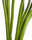 Green flower stems