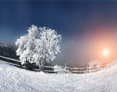 Majestic alone beech tree on a hill slope in the sunny beams. Dramatic wintry scene. Carpathian, Ukraine, Europe. Beauty world. Happy New Year!