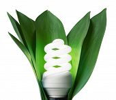 foto of light-bulb  - fluorescence lamp in green leaves of isolated on a white background - JPG