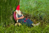 Funny gnome sleeping under a tree in the forest