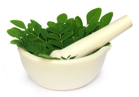 picture of moringa oleifera  - Mortar and pestle with medicinal moringa leaves over white background - JPG