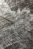 picture of transverse  - Natural Weathered Grey Tree Stump Cut Texture - JPG