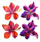 stock photo of stroking  - a set of floral watercolor elements with white and black stroke - JPG