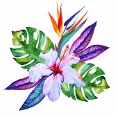 picture of hibiscus  - tropical flowers bouquet in watercolor hibiscus plumeria monstera palm bird of paradise - JPG