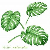 pic of tropical plants  - Set of watercolor tropical plants leaves - JPG