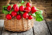 picture of radish  - bright fresh organic radishes with leaves in a basket - JPG
