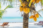 Постер, плакат: Coconuts On A Palm Tree Against Tropical White Sandy Beach