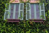 stock photo of creeper  - Double windows with creeper of house in rural - JPG