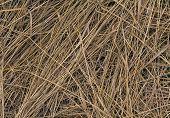 stock photo of dry grass  - Beveled yellow dry grass - JPG