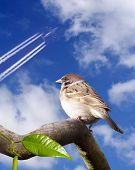 Sparrow and aircraft