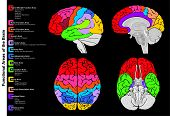 Human Brain Functional infographic including all areas and its functions structure diagram  lobes la poster