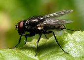Fly - extremely closeup