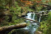 White creek - Most beautiful place in National park Sumava Czech Republic Europe