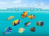 stock photo of coral reefs  - Tropical reef fish - JPG