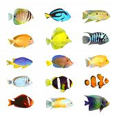 stock photo of saltwater fish  - Great collection of a tropical fish on a white background - JPG
