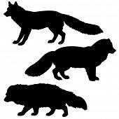 silhouettes of the vixen, polar fox, racoon