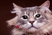 Grumpy Cat In Close Up Photo poster