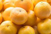 Постер, плакат: Bunch of Fresh Mandarin Oranges Stack of mandarins Lot of Mandarin Oranges Pile of a Fresh Mandar