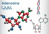 Adenosine - Purine Nucleoside Molecule, Is Important Part Of Atp, Adp, Camp , Rna, Dna. Structural C poster