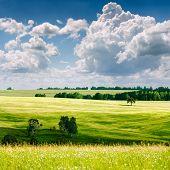 paisaje de verano hermoso