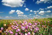 Paisaje de verano con flores de campo. Se centran en el horizonte.