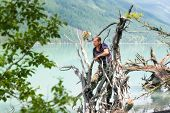 A Man Stands On A Fallen Tree In The Water. poster