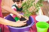 Replanting Home Flowers. The Boy Helps His Mother To Plant Plants In A Pot. A Child Learns To Care F poster