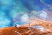 A Drop Of Water Dew On A Fluffy Feather Close-up On Blue Blurred Background. Abstract Romantic Magic poster