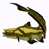 Edestus Shark Tail 3d Illustration - Edestus Was An Early Shark That Lived During The Carboniferous  poster