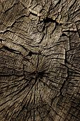 Wooden Texture Background.cropped Shot Of A Textured Background. Tree Texture. Tree Background. Crac poster