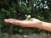 newly born plant