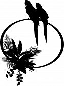 beauty silhouette of macaw
