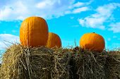 Pumpkins and blue sky