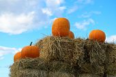 Orange pumpkins and blue sky