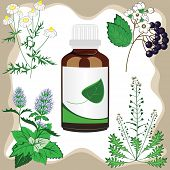 Medicinal Herbs With Bottle, Vector Illustration