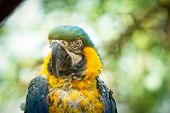 image of animal cruelty  - exotic bird that experienced Animal Cruelty close up - JPG