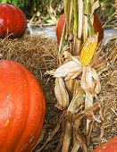 Halloween Pumpkins And Corn