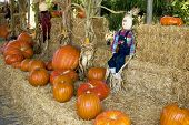 Halloween  Straw Dolls And Pumpkins