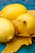 Yellow Citric Still Life poster
